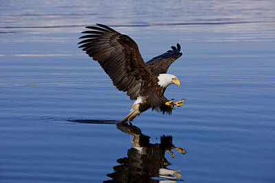 Photograph - Reflections Of Eagle by John Hyde - Printscapes