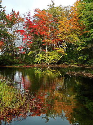 Photograph - Reflections Of Fall Foliage by Nancy Griswold