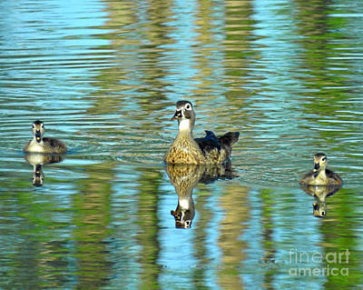Photograph - Reflections Of Family Swim Lessons by Kathy M Krause