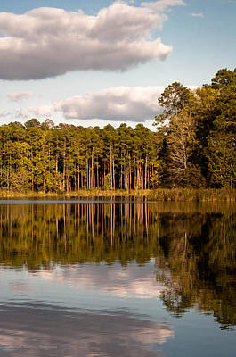 Photograph - Reflections Of Nature by Mechala Matthews