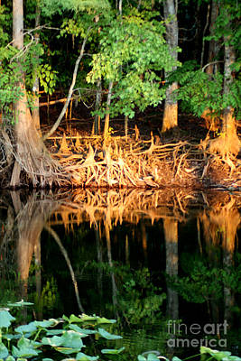 Reflections Of Our Roots Art Print by Lora Wood