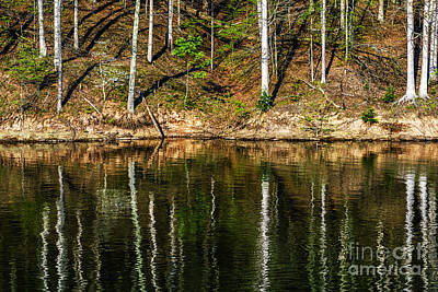 Reflections Of Spring Art Print by Thomas R Fletcher