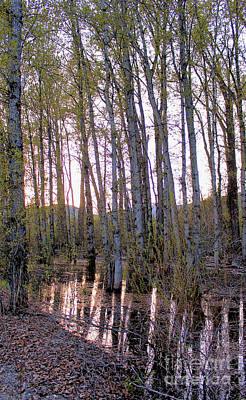 Photograph - Reflections Of Spring by Victor K