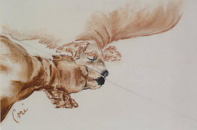 Cocker Spaniel Drawing - Reflections Of The Day by Cori Solomon
