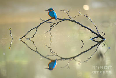 Kingfisher Photograph - Reflections Of The Inner Soul by Corne Van Oosterhout