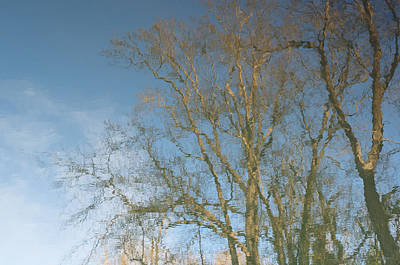 Photograph - Reflections Of Trees by Brian Shepard