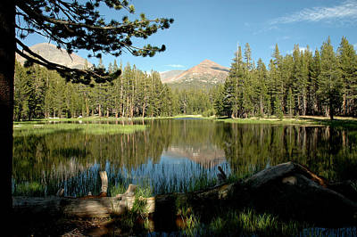 Brush Photograph - Reflections Of Yosemite With Pine by LeeAnn McLaneGoetz McLaneGoetzStudioLLCcom