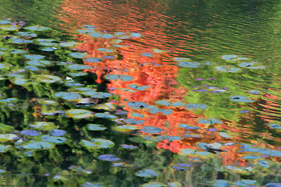 Reflections On A Lily Pond Art Print