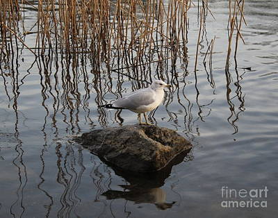 Photograph - Reflections On A Winter Day by Dora Sofia Caputo Photographic Art and Design