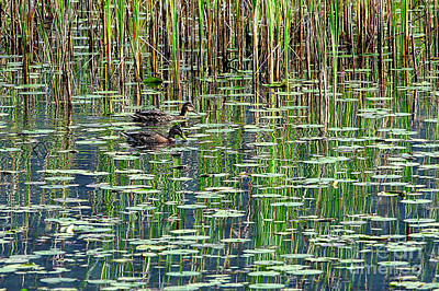 Reflections On Duck Pond Art Print by Sharon Talson
