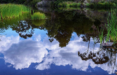 Photograph - Reflections On Pond by Lexa Harpell