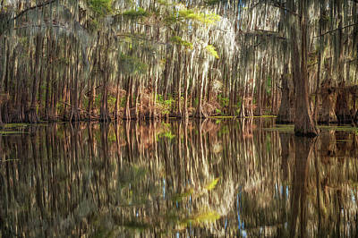 Photograph - Reflections On The Bayou by Sheena LeAnn
