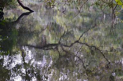 Photograph - Reflections Over Homosassa Springs by Warren Thompson