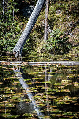 Photograph - Reflections by Paul Freidlund