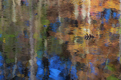 Photograph - Reflections by Rene Pronk