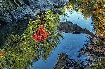 Photograph - Reflections by Sharon Seaward