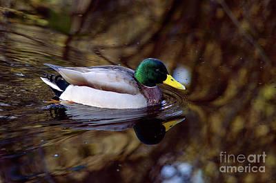 Photograph - Reflections by Terry Elniski