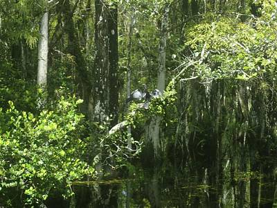 Photograph - Reflections Upon The Swamp by Denise Cicchella
