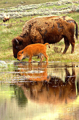 Photograph - Reflections With The Red Dog by Adam Jewell