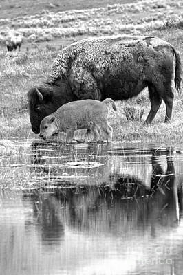 Photograph - Reflections With The Red Dog Black And White by Adam Jewell
