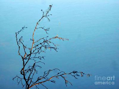 Photograph - Reflective Branches by Marcia Lee Jones