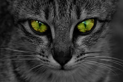 Photograph - Reflective Cat Eyes by Ramabhadran Thirupattur