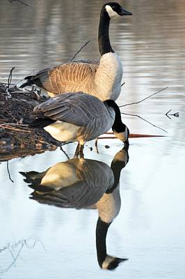 Photograph - Reflective Geese by Bonfire Photography