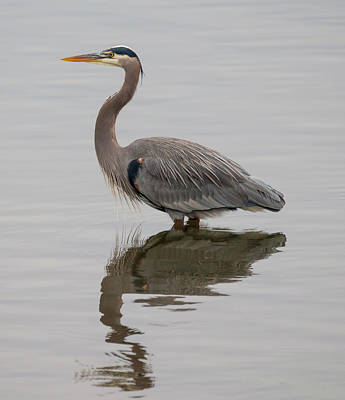 Photograph - Reflective Heron by Loree Johnson