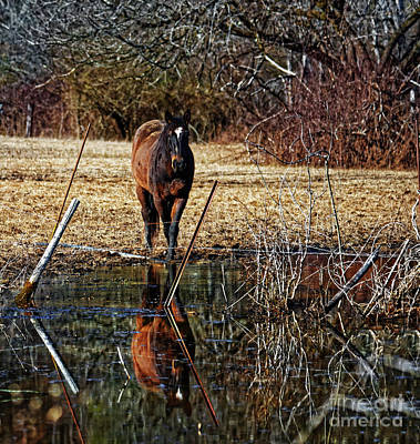 Photograph - Reflective Horse by Paul Mashburn