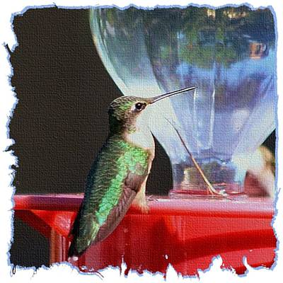 Photograph - Reflective Hummingbird by Ellen O'Reilly