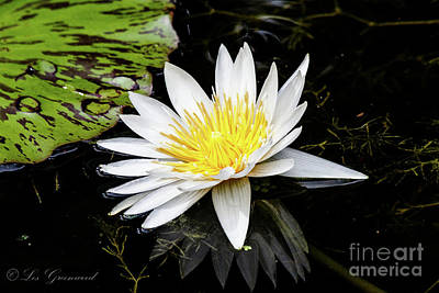 Photograph - Reflective Lily by Les Greenwood