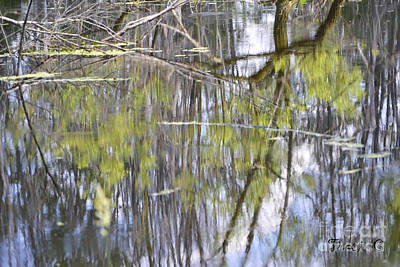 Photograph - Reflective Listening by Traci Cottingham