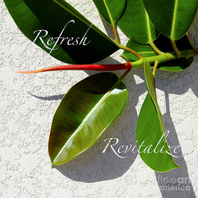Photograph - Refresh Revitalize Leaf  by Sueann Hack