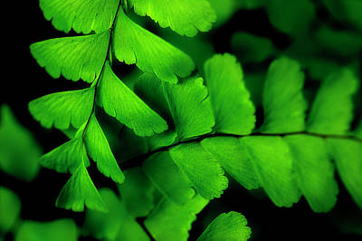 Forest Floor Photograph - Refreshing by Mike Eingle