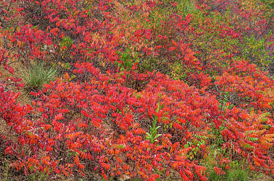 Photograph - Refulgent Foliage  by Bijan Pirnia