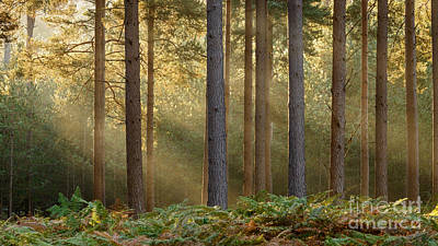 Bracken Fern Photograph - Refulgent New Forest by Richard Thomas