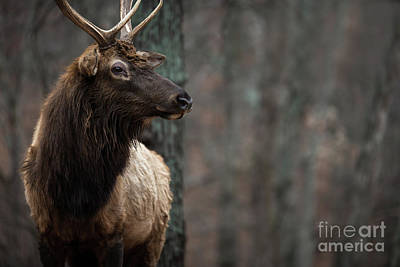 Photograph - Regal by Andrea Silies