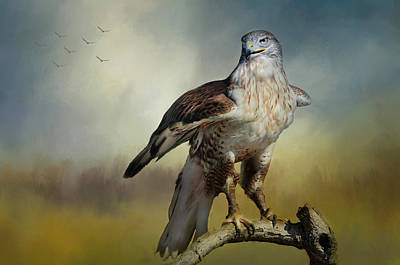 Photograph - Regal Bird by Barbara Manis