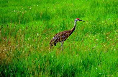 Photograph - Regal Crane by Kimberly Woyak