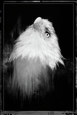Photograph - Regal Eagle In Noir by Alice Gipson