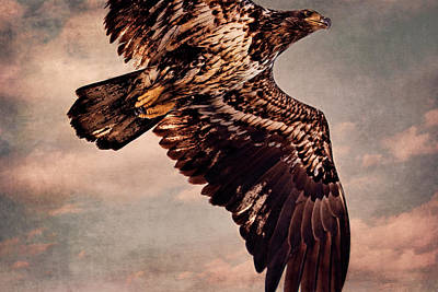 Photograph - Regal Eagle by Peggy Collins