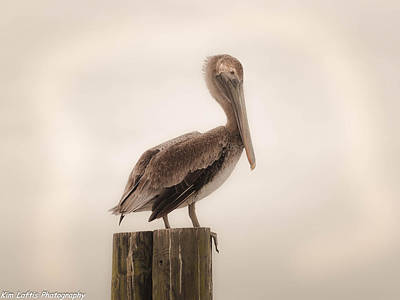 Photograph - Regal  by Kim Loftis