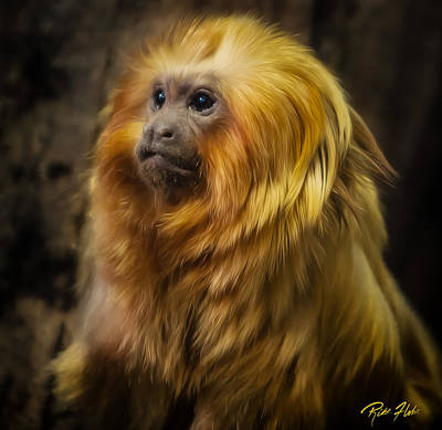 Photograph - Regal Monkey by Rikk Flohr