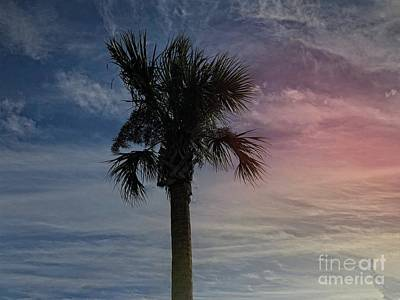 Photograph - Regal Palm Tree by Luther Fine Art
