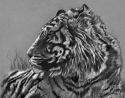 Drawing - Regal Tiger by Scott Parker