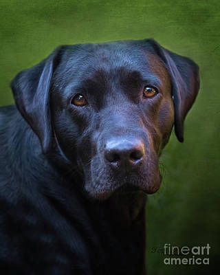 Photograph - Reggie The Black Labrador by Terri Waters