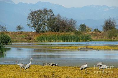 Photograph - Reifel Bird Sanctuary by Frank Townsley
