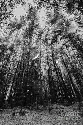 Reigning Pines Print by Jorgo Photography - Wall Art Gallery