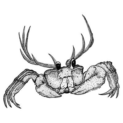 Bizarre Drawing - Reincrab by Karl Addison
