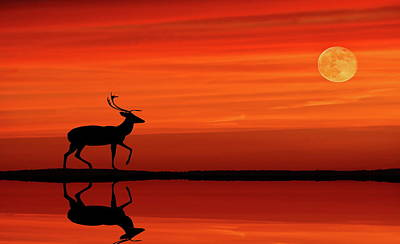 Photograph - Reindeer By Moonlight by Andrea Kollo
